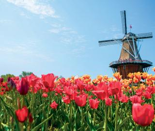 Tulip Time Festival Holland Michigan - Holland tulip festival