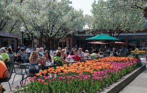 Outdoor Dining Downtown Holland
